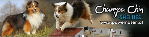 bannerchampachinshelties